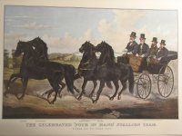 The Celebrated Four in Hand Stallion Team